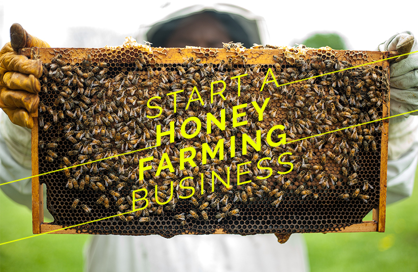 Honey Farming Business