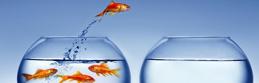 Diversification: Success Stories – Business Ideas
