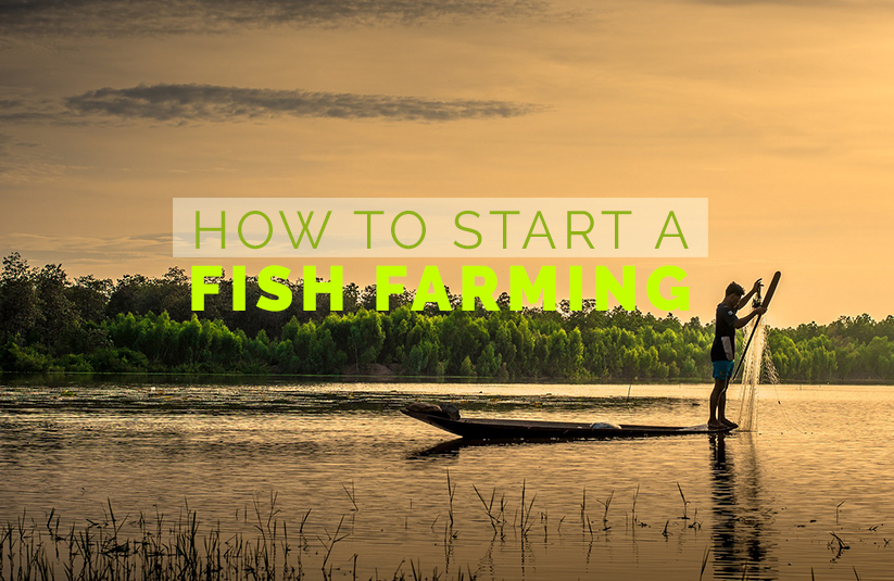 How To Start a Fish Farming Business?