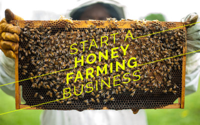 Start A Honey Farming Business