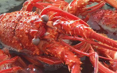 How To Start A Lobster Farming Business?